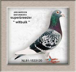 batenburg3_wittenbuik_copie