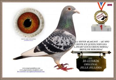 10-1221826 JELLEMA ORIGINAL HEN